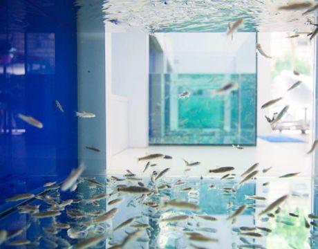 Comprare garra rufa dottor fish for Comprare pesci