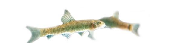 Centri Fish Therapy in Italia