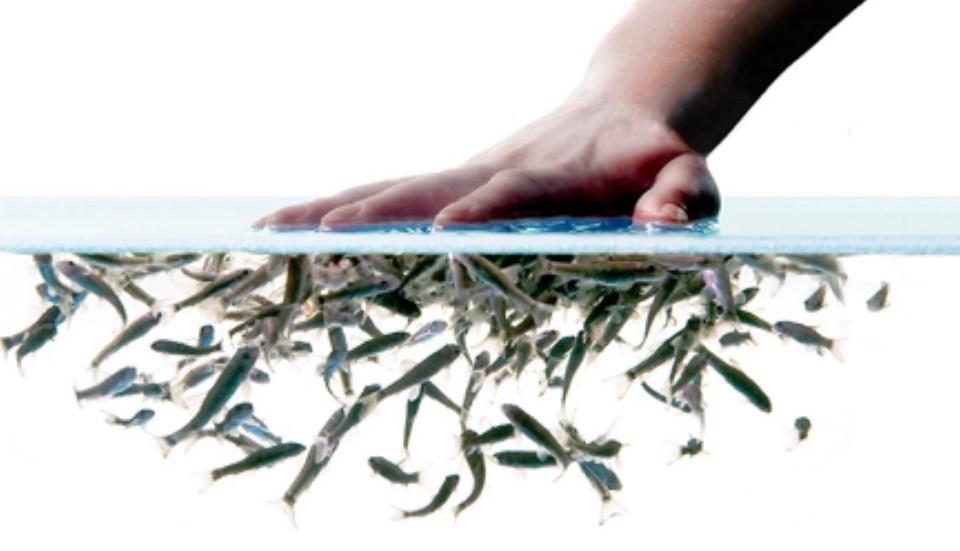 Dottor fish garra rufa fish therapy spa for Comprare pesci